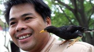 main-bird_1