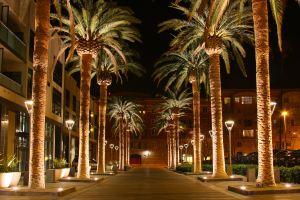 SAN_JOSE_CALIFORNIA_PALM_TREE_2010