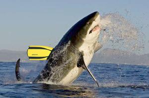El Fin al Shark Finning!